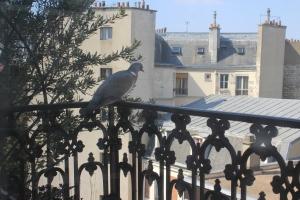 pigeon in balcony