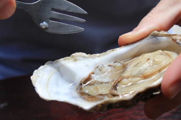 Resultat d'imatges de eating oysters