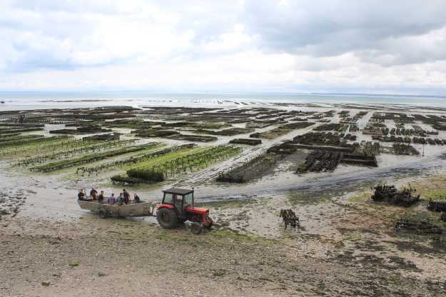 oyster-farming in Cancale