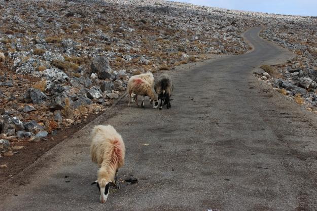 road to Livaniana