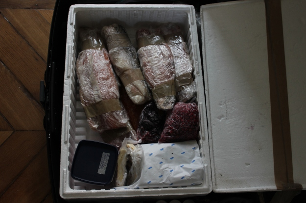 transporting frozen fish in a suitcase