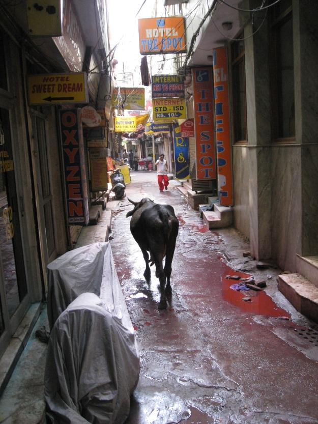 Delhi street view