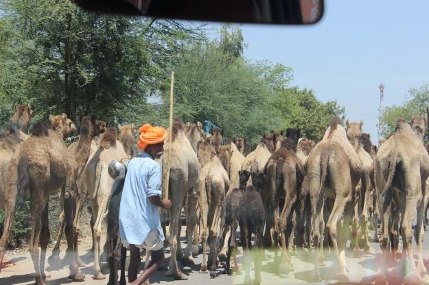 Rajasthani road