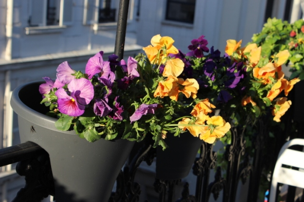 Parisian balcony with pansies